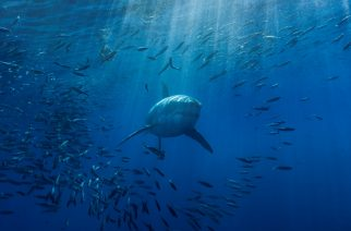 10 Things More Likely to Kill You Than a Shark