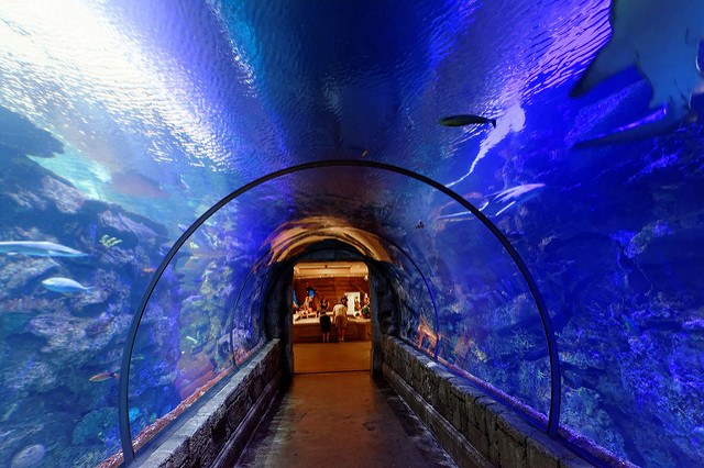 Tunnel and Mandalay Bay Aquarium, Las Vegas.