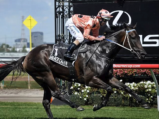 Black Caviar became famous for staying undefeated in her career