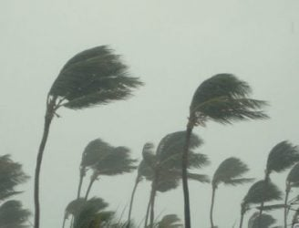 Palm trees blowing in storm