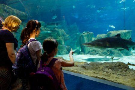 Tourists exploring sea life in aquarium.
