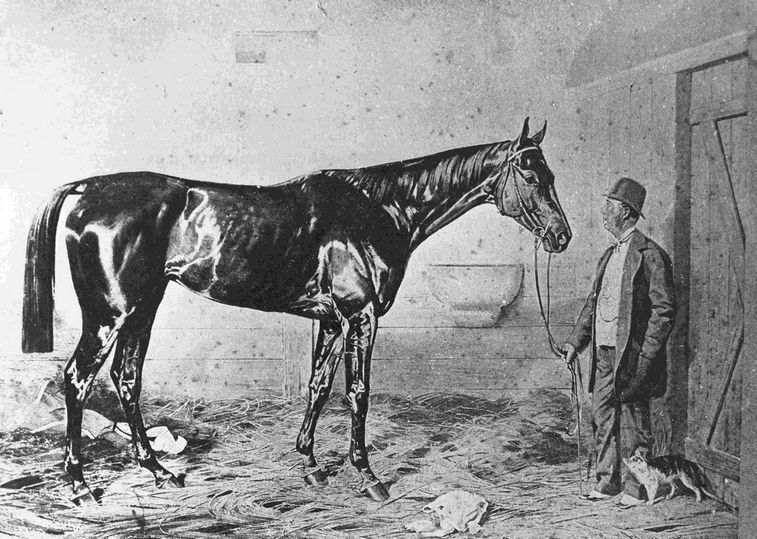Kincsem was a popular horse in the 19th century