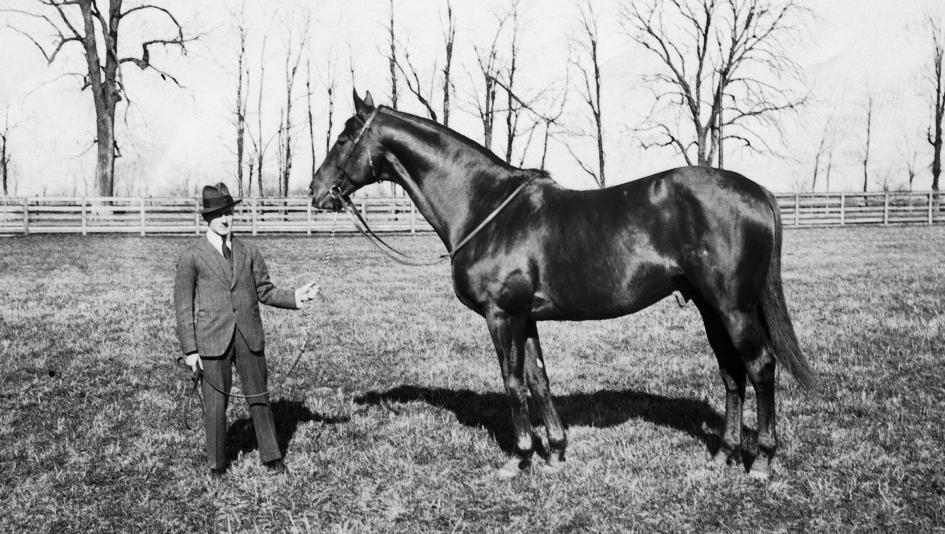 Man O' War was a hugely popular American thoroughbred