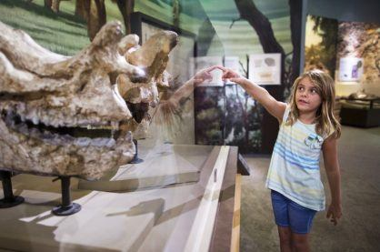 A child fascinated by dinosaur bones at a museum