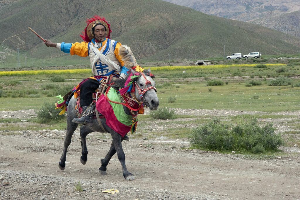 A typical breed of race horse from Tibet