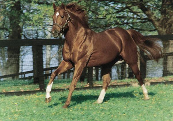 Secretariat, an American thoroughbred
