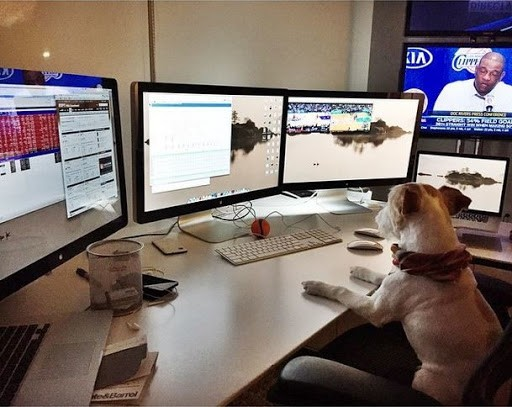 Voulgaris's dog sat at his work station