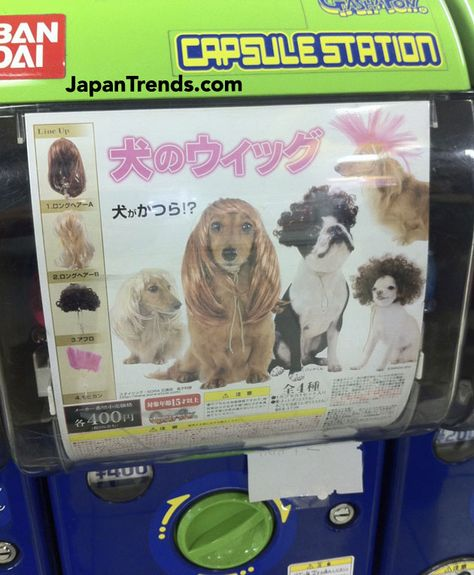 Dog wig vending machine
