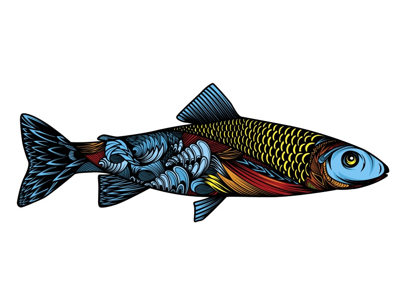 colourful fish illustration
