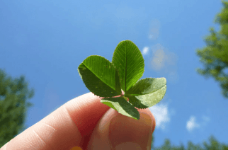Legend has it that even Eve knew that having a four-leaf clover in hand would be good luck, so she took it out of the garden with her. (Image: http://publicdomainpictures.net)