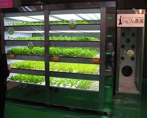 Lettuce vending machine