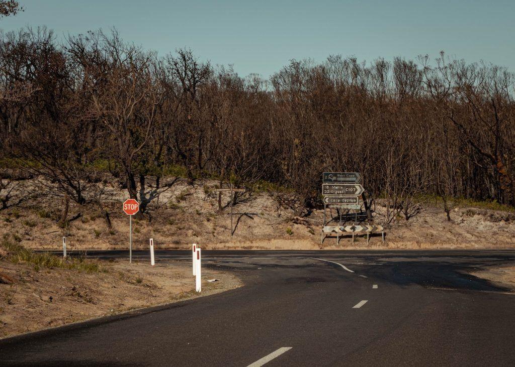 Burnt forest in Australia