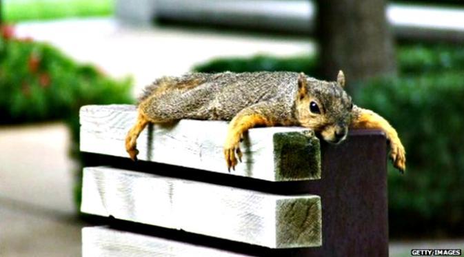 high squirrel