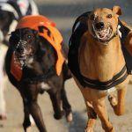 Macau rettet 600 Windhunde vor dem Tod