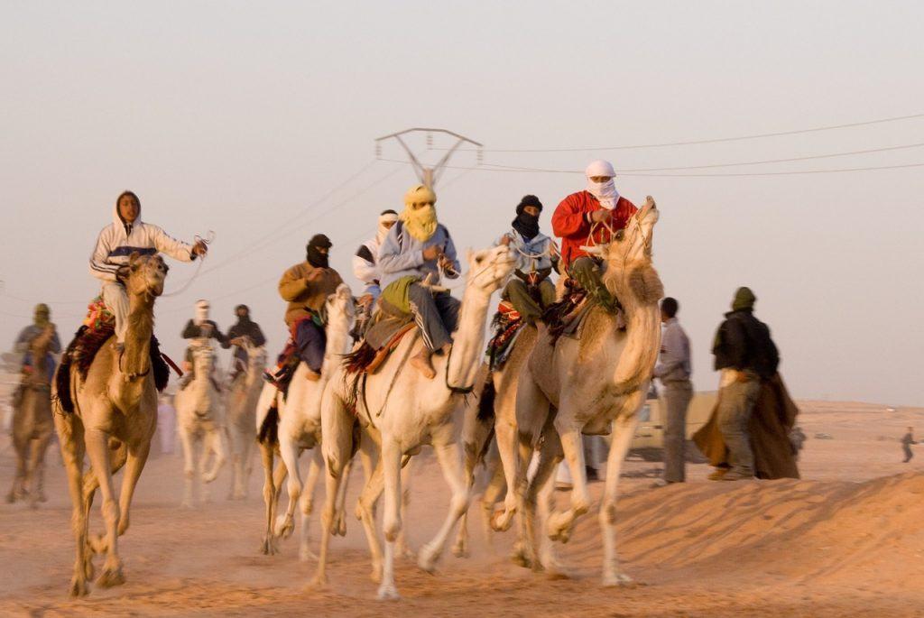 Kamele, Rennen