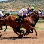 Pferde im Lauf