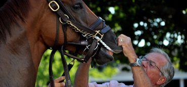 Pferd, Veterinär