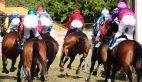 Pferderennen, Jockeys, Pferde von hinten
