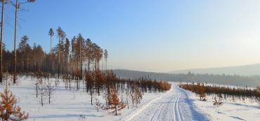 Schnee, Himmel, Bäume