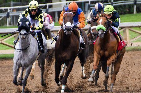 Pferderennen, Pferde, Jockeys