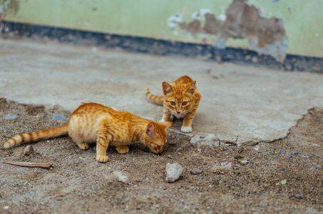 Katzen auf der Straße Dan Gold