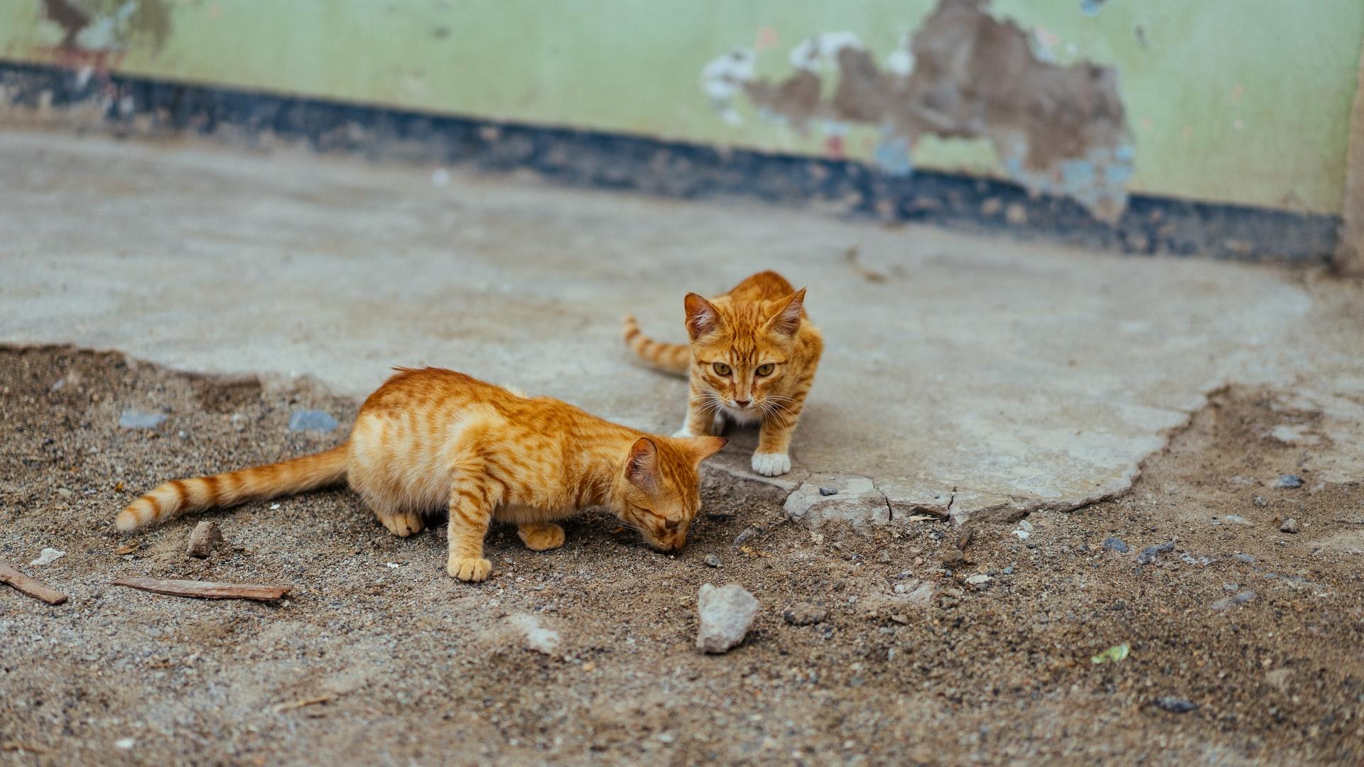 Katzenklinik