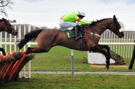 Pferd, Reiter