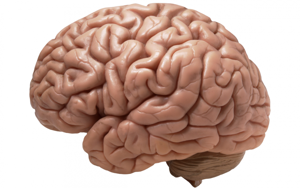 Scientists Find Area of the Brain Linked to Gambler\'s Fallacy