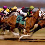 Arizona horse races wagering