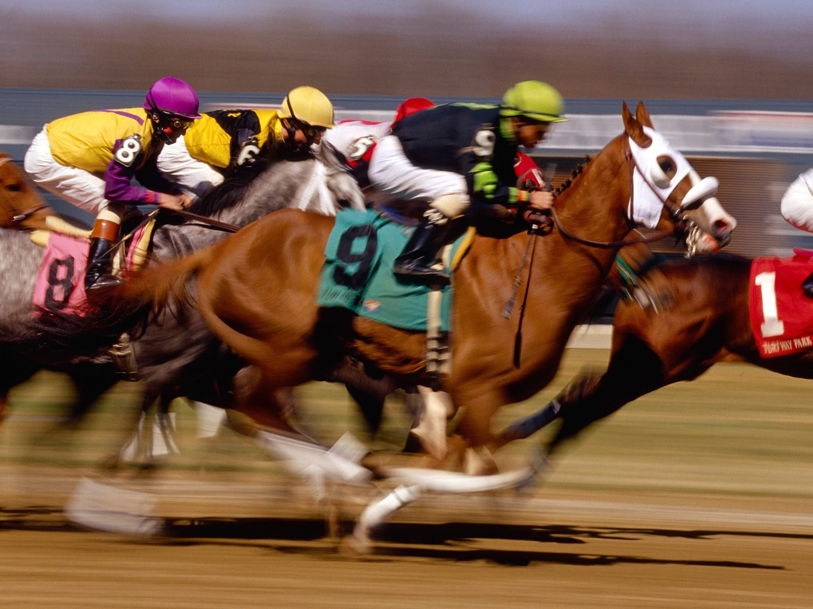 Arizona horse races wagering