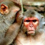 Study Finds Monkeys Believe in Following Winning Streaks