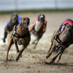 Casinos Seek Conscious Uncoupling from US Dog Racing