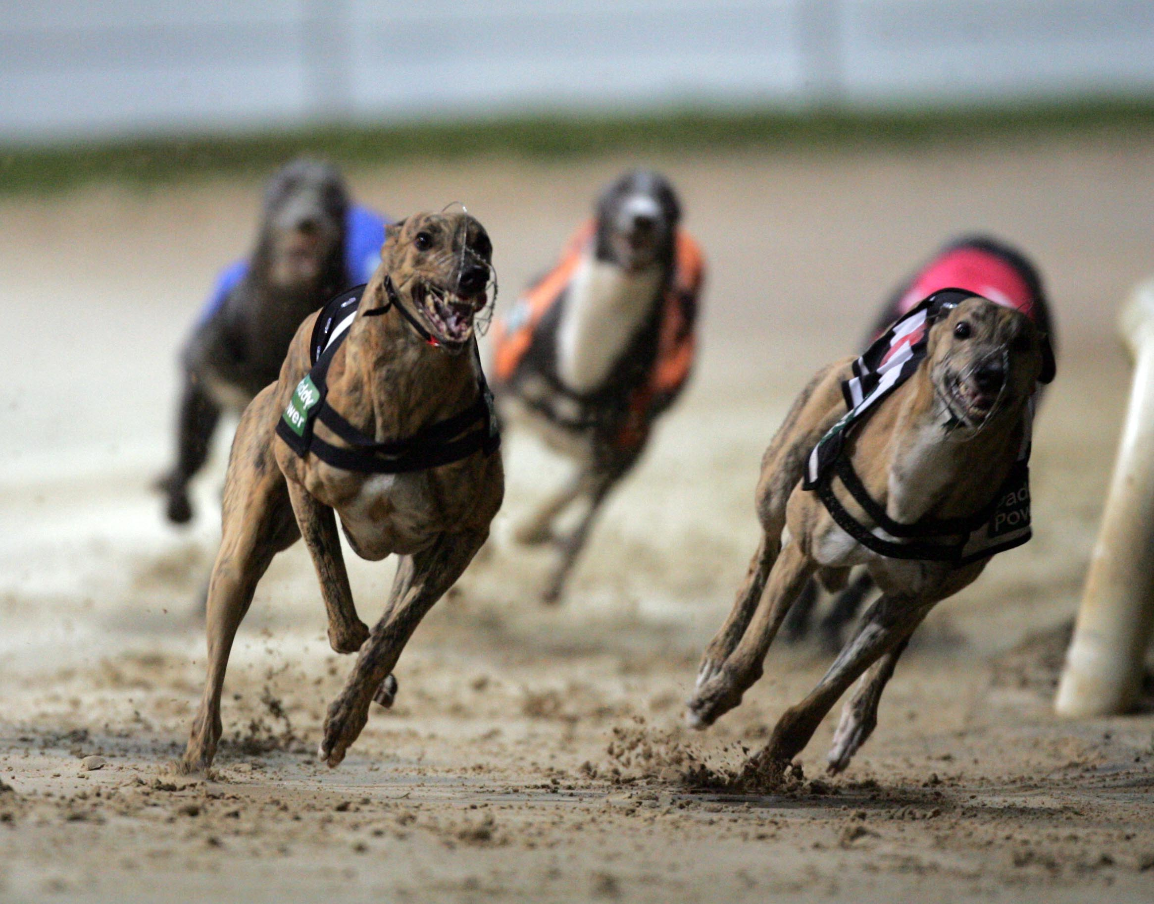 Greyhound racing is a dying sport in America