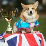 Ladbrokes Holds Corgi Race To Predict Royal Baby Name