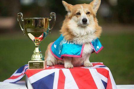 Ladbrokes corgi race royal baby