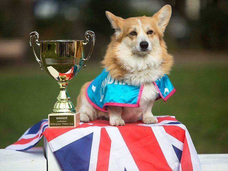 Ladbrokes Holds Corgi Race To Predict Royal Baby Name