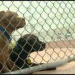 New Jersey Strengthens Laws Against Dog Fighting