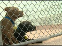 New Jersey dog fighting laws