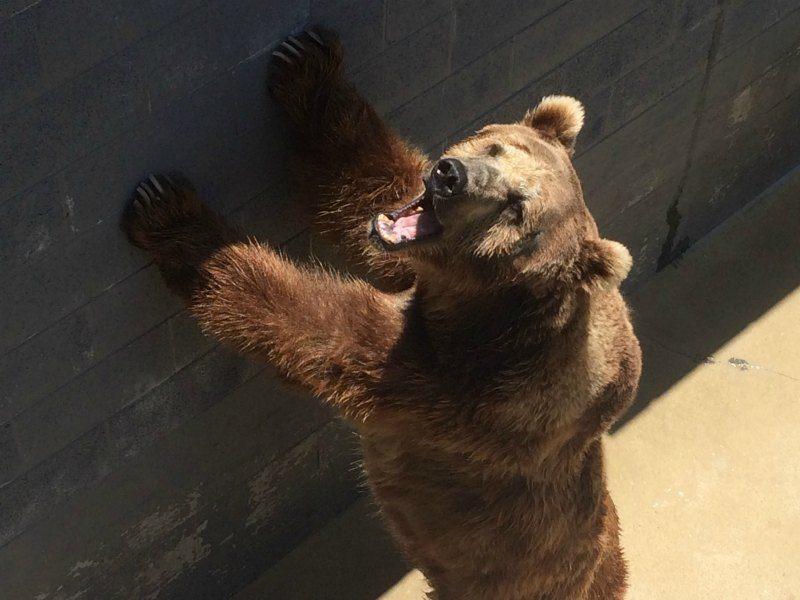 Cherokee Bear Zoo Daniel Negreanu PETA