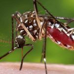 Brazil Summer Olympics in Jeopardy from Spread of Zika Virus