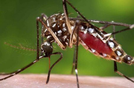 Brazil Summer Olympics Zika virus