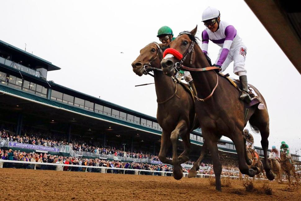 Nyquist Preakness Stakes Kentucky Derby