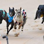 "New South Wales Bans ""Cruel"" Greyhound Racing Industry"