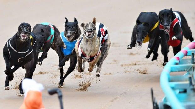 New South Wales bans greyhound racing