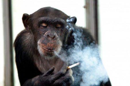 casino chimp John Russia alcohol cigarettes