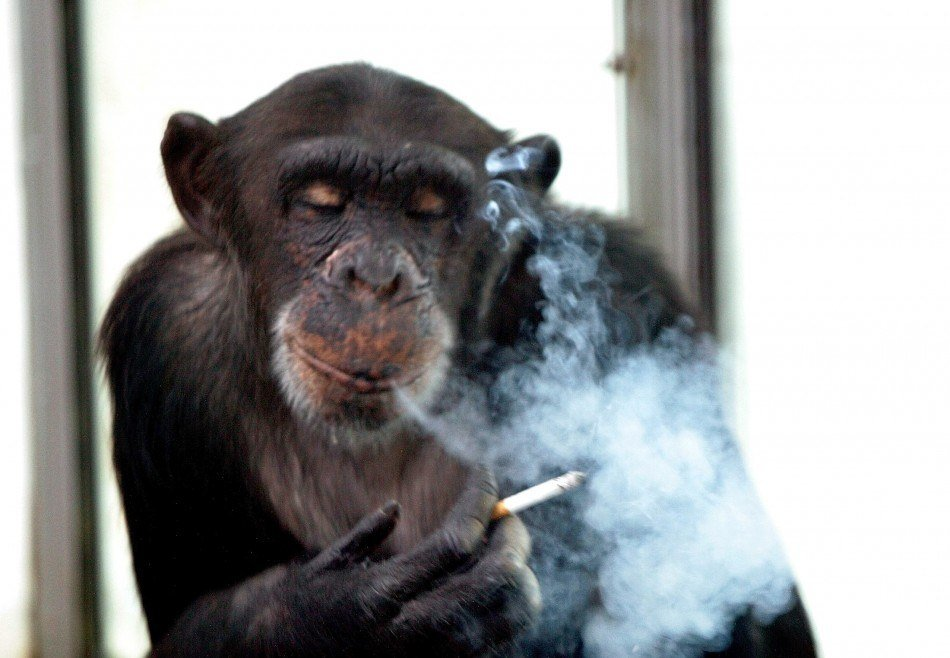 casino chimp John Russia alcohol cigarettes