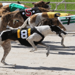 Greyhound Activists Weigh in on Florida's Gambling Battle