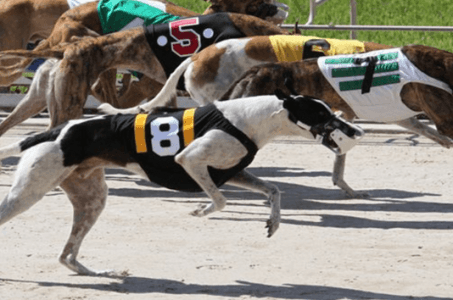 Florida gambling bill could lead to greyhound racing ban