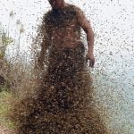 Bee swarm Thai lottery player