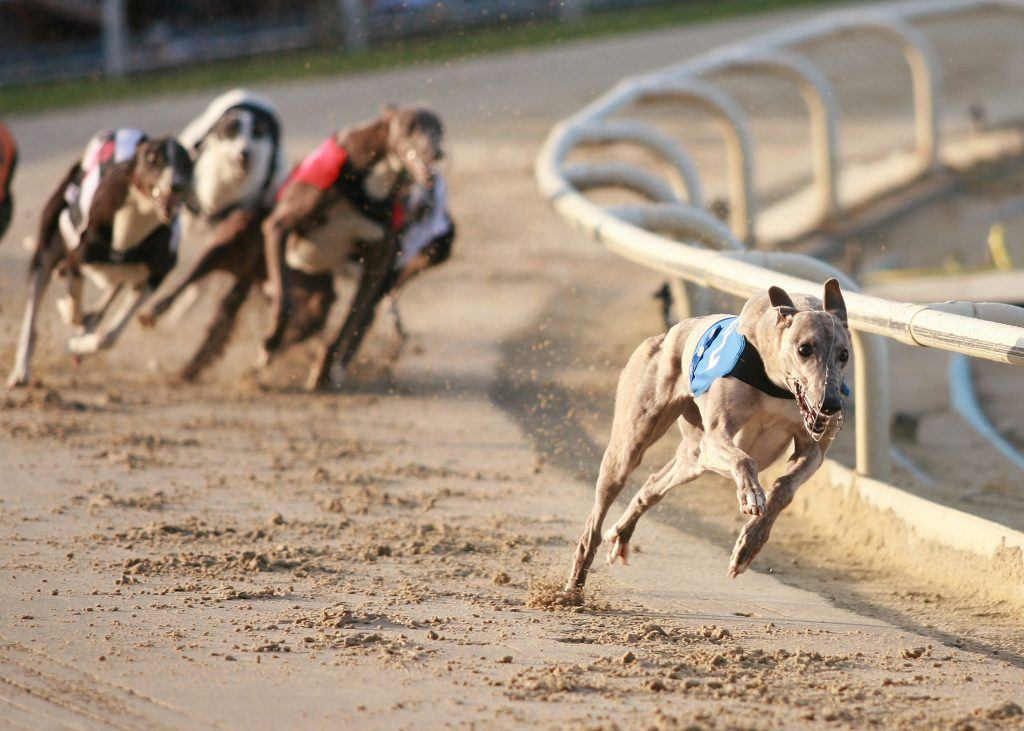 Florida Regulators Allow Magic City to Scrap Dog Racing